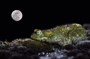 La rana y la luna